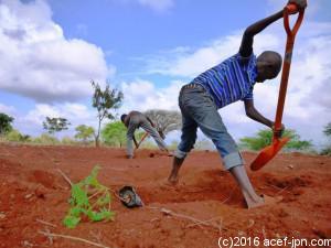 シャベルで苗木をいれる穴を掘る作業。