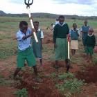 緑化推進 学校の森