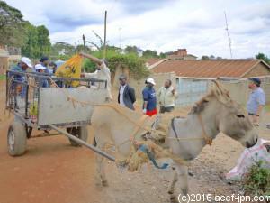 ゴミを運んでくれるのはロバ! ケニアでの運送手段としてロバは大活躍です。