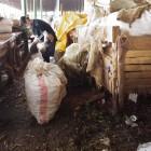 毎週月・木、朝7:00からマーケットのゴミ回収。